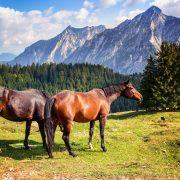 Pferdefleisch - ConnyPure