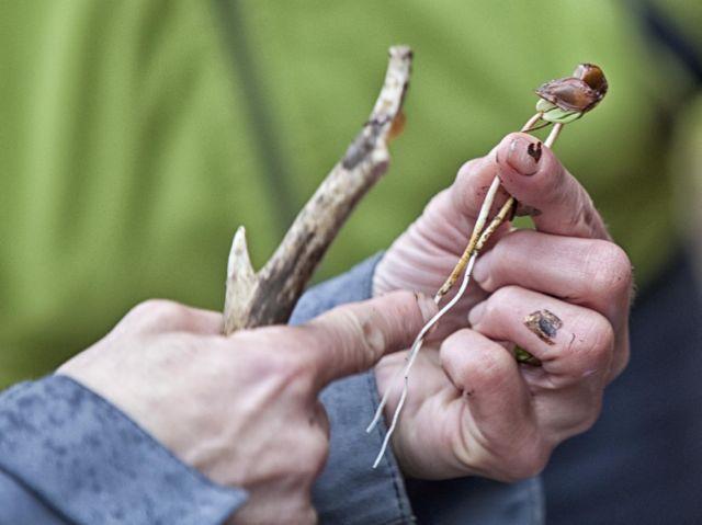 Tipps zum Wildkräuter sammeln - ConnyPURE