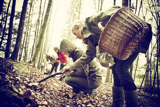 Im Wald Wildkräuter suchen - Blog ConnyPURE
