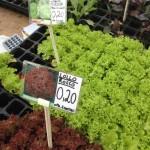 Frischer Salat auf der Schranne - Blog ConnyPURE
