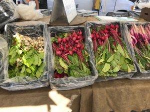 Organic Farmer Markets - Verschiedene Radieschensorten