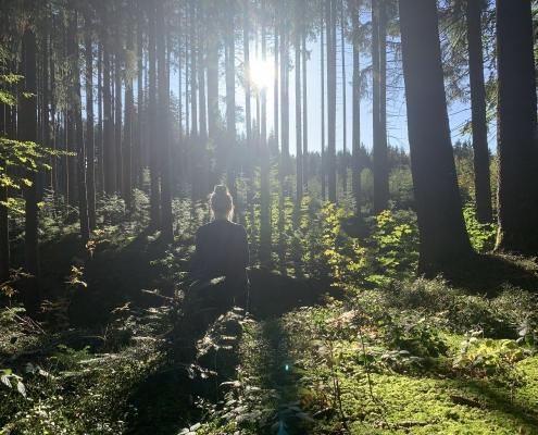 Meditation im Wald - Der Natur ganz Nahe