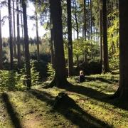 Meditieren im Zen Kloster - 7-Tages-Sesshin