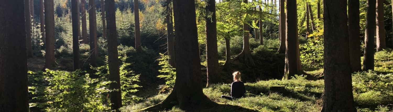 Im Wald meditieren und die Kraft des Waldes spüren